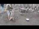 Köpek ve Kurt Dövüşü Kurdun Kafesine Giren köpek Zor Kurtarıldı mp4