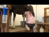 Jade (5 years old) Milks Thalia, the Goat
