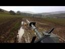 Tank vs Cattle