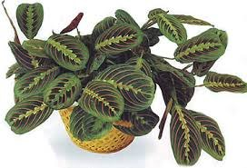 чернаямагия - Магия растений. Магические свойства растений. Обряды и ритуалы. Амулеты и талисманы из растений.  LtIcIZDC56s