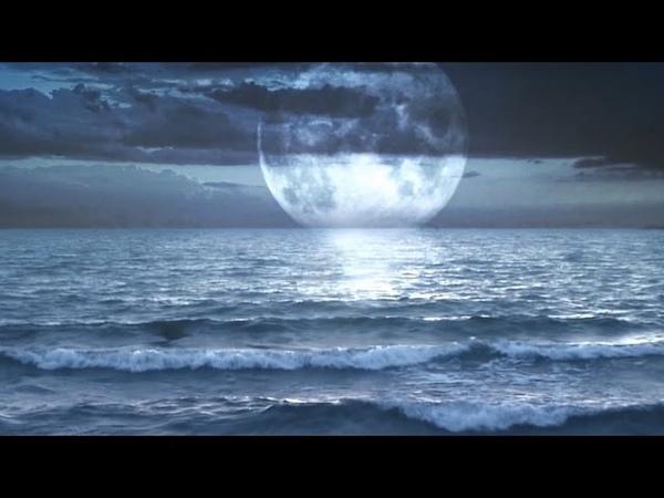Relaxar: Som do Mar e Sons da Floresta - Dormir e Meditar - Natureza Relaxante
