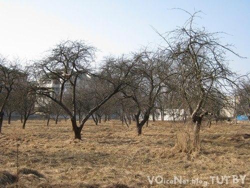 Всех желающих приглашаем посадить своё собственное дерево