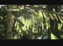 Хранители природы Французская Гвиана Познавательный путешествие 2005