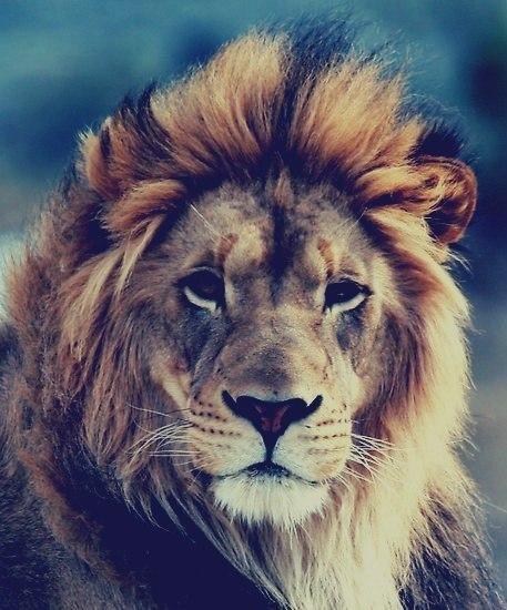 Жизнь ломает сильнейших, ставя их на колени, чтобы доказать, что они м