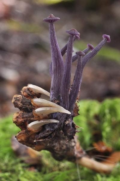 Останки северного енота и грибы, растущие из его лапы, словно букет цветов