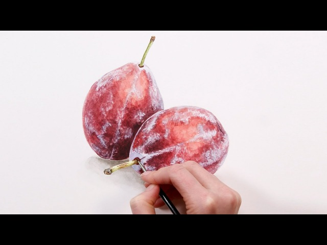 How to paint realistic 'bloom' effects on fruit in watercolour - with Anna Mason
