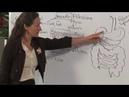 13 Здоровье желудка и синдром раздражённого кишечника, Барбара Онил