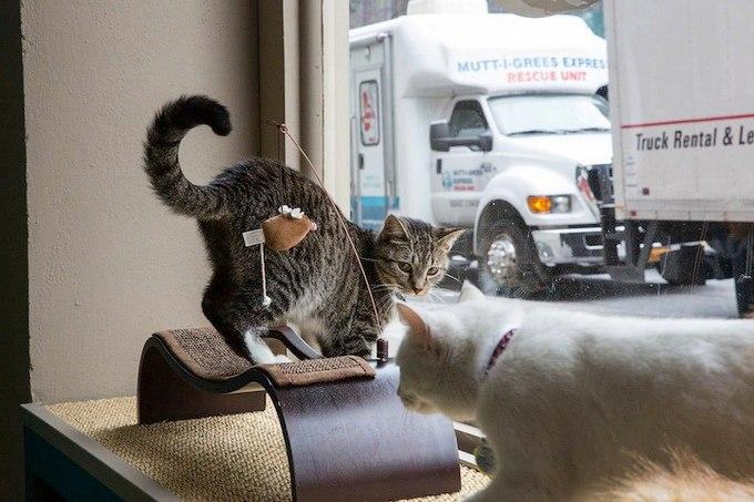 открылось кошачье кафе в  Нью-Йорке