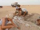 Гигантский доисторический крокодил документальный фильм