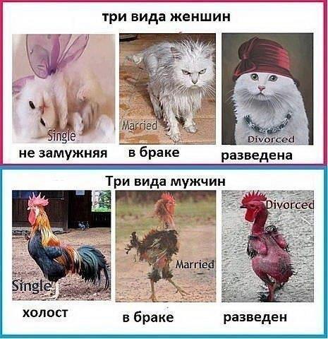 http://cs417328.vk.me/v417328336/4b51/H7-YtEnz_hY.jpg