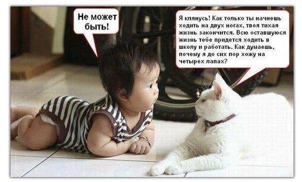 Кошачий юмор - Страница 4 Y6NCKhPSoDI