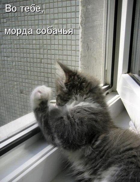 Кошкин юмор ArMuXyuYSsM
