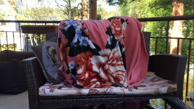 Когда не хочешь вылезать из-под одеялка 😊 vizslabari joking