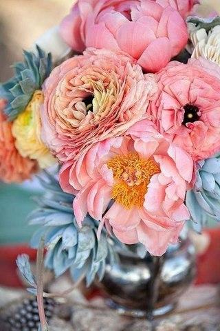 Цветы природа пионы
