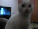 Симба и кино про котов