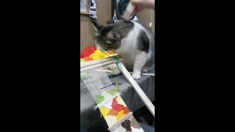 Кот и ткацкая рама 2