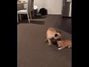 Запретил собаке залезать на диван. Теперь она и кота от этого отучает😂