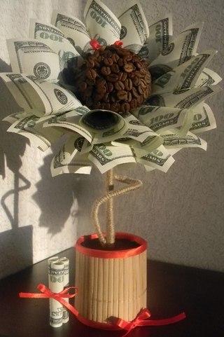 Кофейное дерево денежное дерево