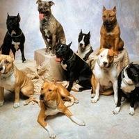 разные породы собак. фото