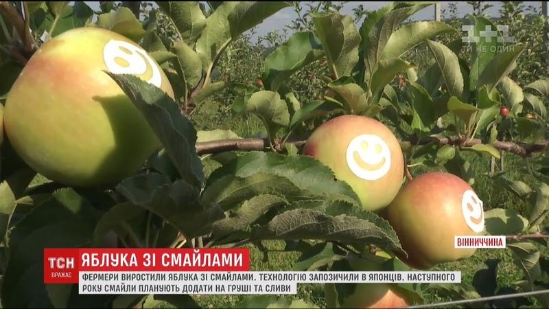 На Вінниччині стали вирощувати яблука зі смайликами