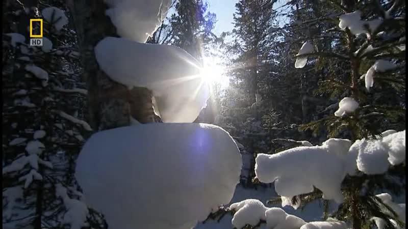 BBC: Дикая Природа России 1 серия Сибирь