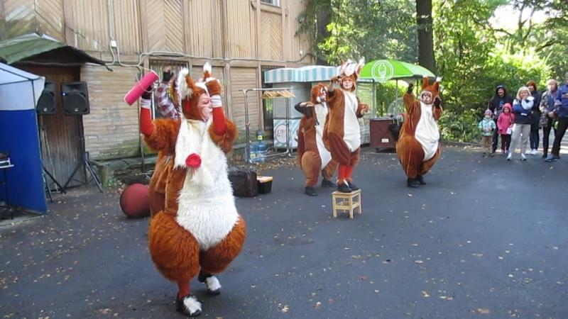 Белки танцуют под зая-зая ... *)