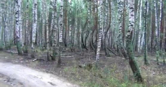 Аномальный лес в Рязани