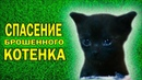 Animal air rescue newborn funny meowing homelles kitten street cats stray мяуканье котёнка мяукает мявкает говорящий кот говорит кошка собака пёс dog cat