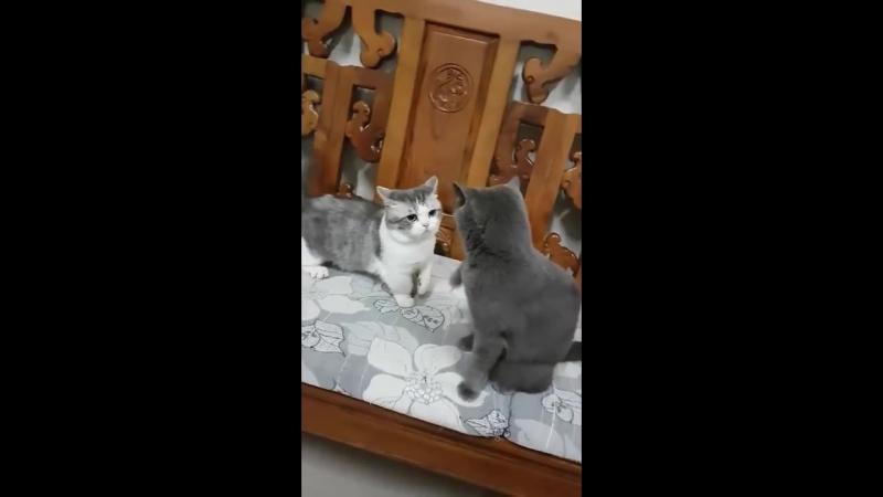 먼치킨 고양이가 다른고양이랑 싸우면 무조건 지는 이유 ㅎㅎ(Feat. 냥냥펀치)