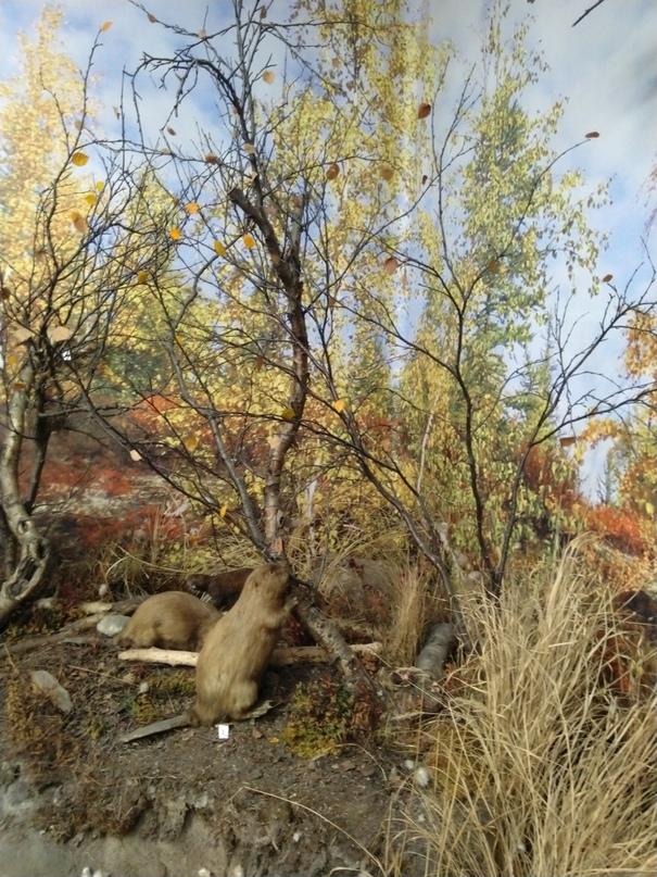 Олечка Старковская | Мурманск