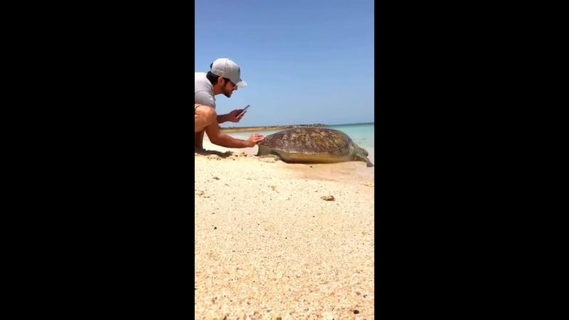 HH Sheikh Hamdan rescues a turtle stuck at Dubai shore_HD.mp4
