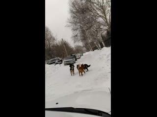 Жителей военного городка держит в страхе стая бродячих собак
