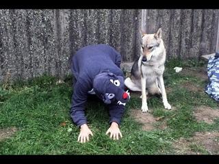Виды дрессировщиков / методы дрессировки собак