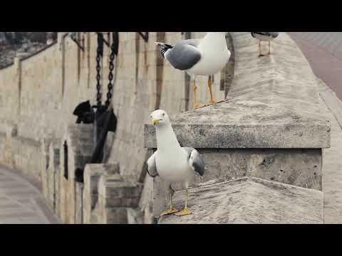 Чайки выпрашивают еду