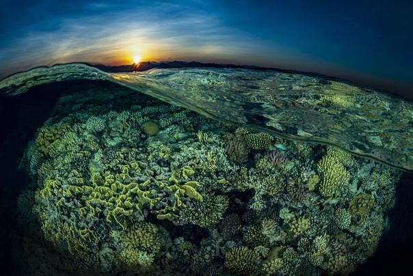 Коралловые рифы в Египте