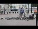 Повелители городских голубей