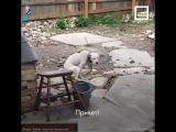 У собаки умер хозяин, но её не оставили одну  (6 sec)