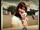 СОБАКИ ПОРОДЫ ЧИХУАХУА _ CHIHUA-HUA DOGS