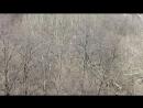 09.04.2018 Донецк - рыжая белка скачет во дворе - мое видео