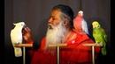 Sri Ganapathy Sachchidananda Swamiji Live in Malaysia - 2