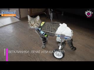 Мегаполис - Ветклиники лечат или калечат - Нижневартовск+