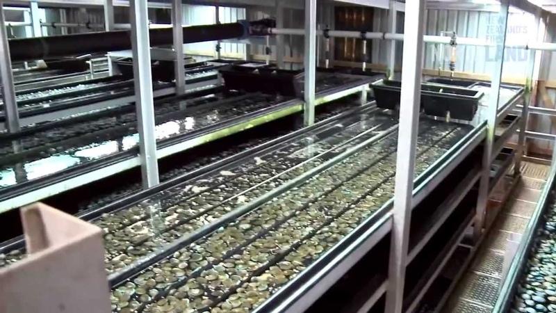 Aquaculture Northland New Zealand