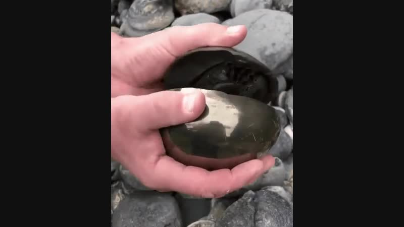 A real-life helix fossil.