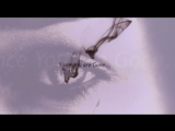 Since You Are Gone - Marga Sol (Official Video)