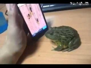 Приколы с животными Зубастая Лягушка!