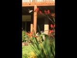 Американские колибри))