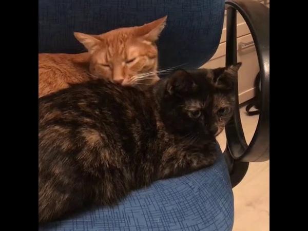 3697). 27.09.2018 - Кошка Фрида уехала домой (видео из дома)