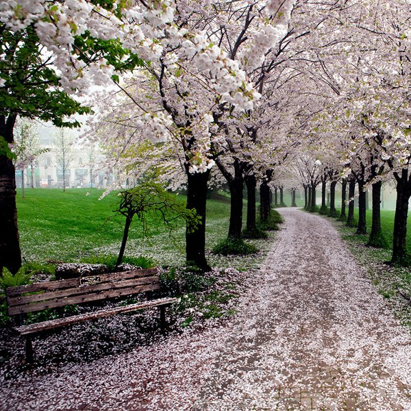 Весна в парке Спенсер Смит, Берлингтон, Онтарио, Канада