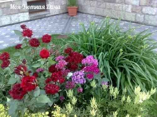 можно ли вырастить розы из букета можно. срежьте цветы, подрежьте концы стеблей, листья подрежьте наполовину каждого лепестка, поставьте на укоренение в раствор корневина или гетероауксина на