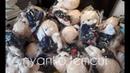 UNBOXING JIMIN fansite toys Meowchim ♡l Распаковка игрушек Чимина BTS